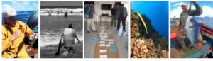 Curso Postgrado internacional en la UCN:   Analizarán rol de la comunidad y de tomadores de decisión en el manejo y conservación de ambientes marinos