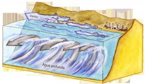 Climatología y fisiología de organismos marinos: CEAZA se adjudica dos proyectos FONDECYT regular