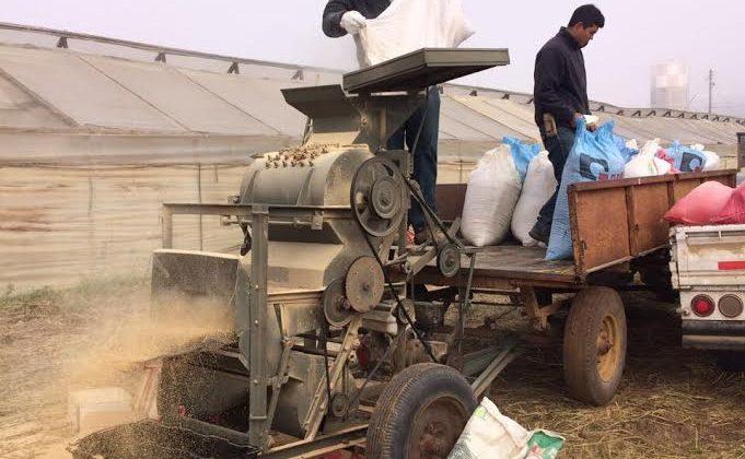 En el marco del Programa de Transferencia de Conocimiento Científico Técnico del CEAZA: Estudiantes de Liceo agrícola de Ovalle aprenden labores de trilla de quinua