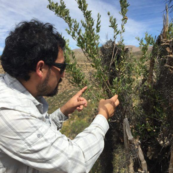 En Ovalle: Darán a conocer hallazgos científicos en materia de alimentación caprina