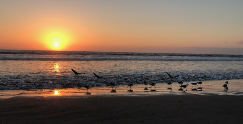 Eclipse generaría efectos sobre aves y otros organismos