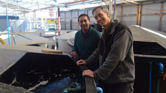 Estudio de la cojinova:  Aportan a la diversificación acuícola regional en el contexto del cambio climático