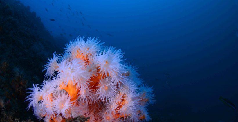 Construyen árbol genético de corales más completo hasta la actualidad