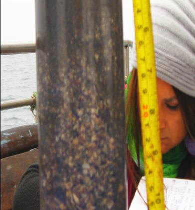 A través de reconstrucción paleoambiental de los últimos 8 mil años, en bahías de Tongoy y Guanaqueros: Describen historia de intensificación de Zona de Mínima de Oxígeno en la costa de Chile que influye en su productividad