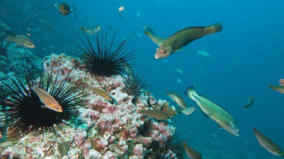 Rapa Nui, Salas y Gómez/Juan Fernández, Desventuradas: Plantean cambios en la conectividad entre territorios insulares como consecuencia del cambio climático